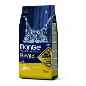 Monge Bwild gatto