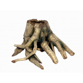 HAQUOSS Arboreal Root