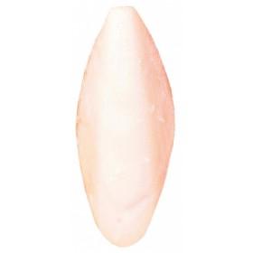 Assortimento di ossi di seppia, sfusi