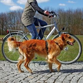 Guinzaglio per bici e jogging