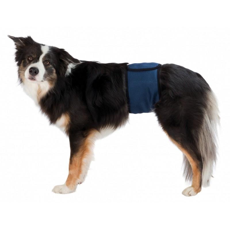 Fascia igienica per cani maschi for Arredamenti maschi