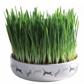 Ciotola in ceramica con erba gatto