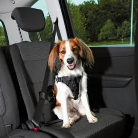 Pettorina per automobile Dog Comfort